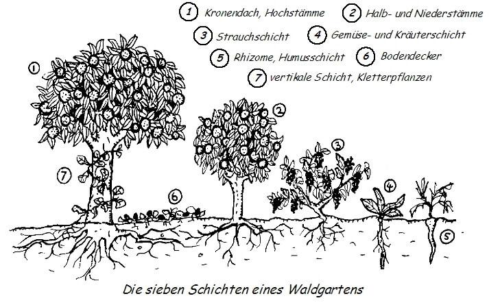 Waldgarten Schichten