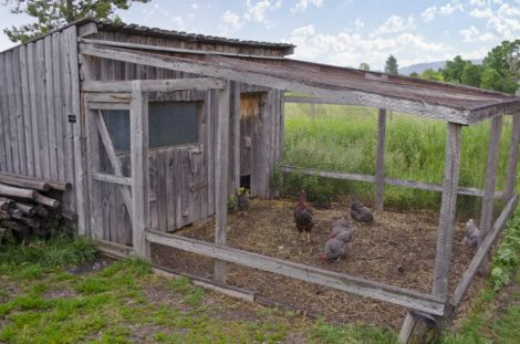 Hühner Haus