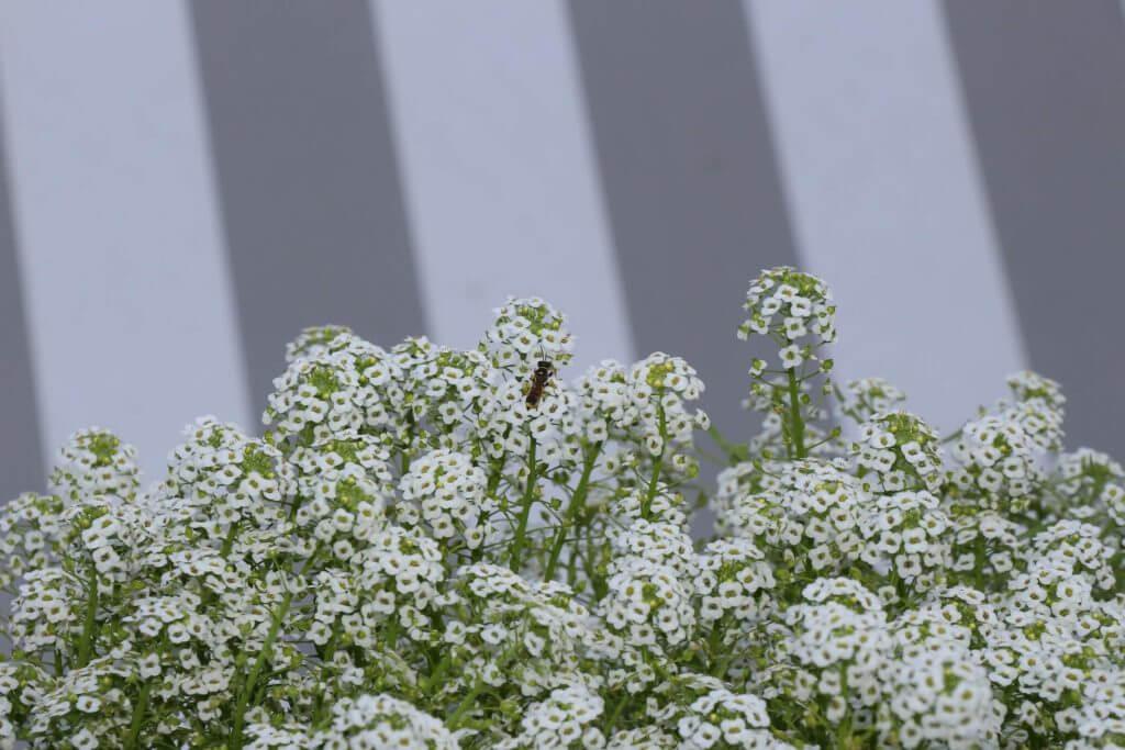 Bienenweide 2